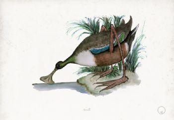 Shoveller - artist signed print